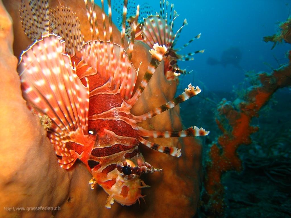 Indonesia, Lembeh, Fish