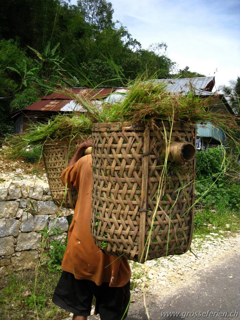 Indonesia, Sulawesi, Rantepao, Farmer