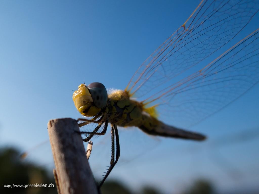 Italy, Costarainera, Insect