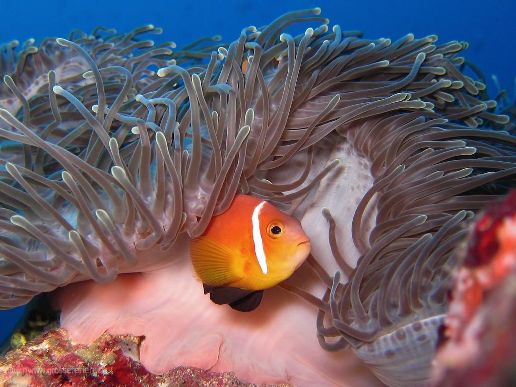Maldives, Nautilus, Nemo