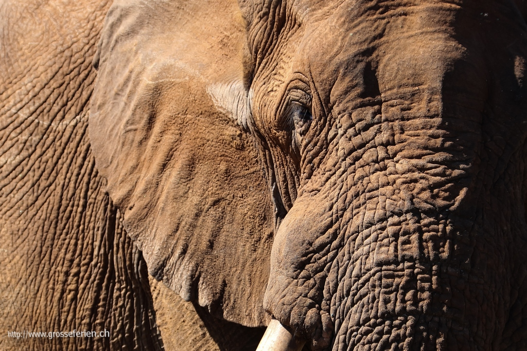 Namibia, Erindi, Elephant