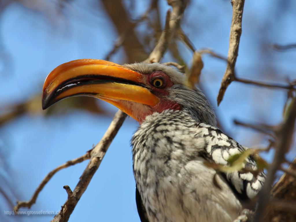 Namibia, Ethosha, Bird