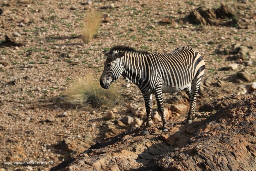 Namibia, Rooiklippe, Zebra