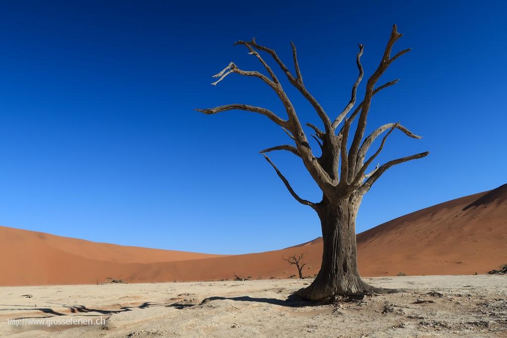 Namibia, Sesriem, Tree