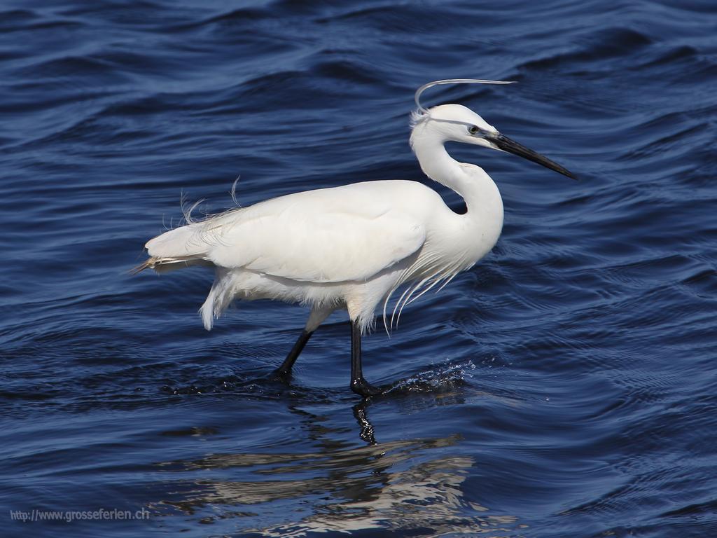 Namibia, Walvis Bay, Bird