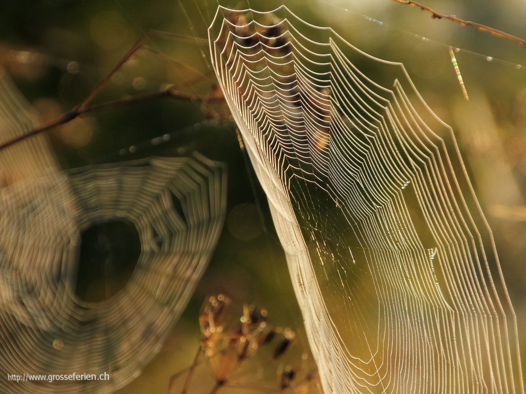 Poland, Bialowieza National Park, Spider Web