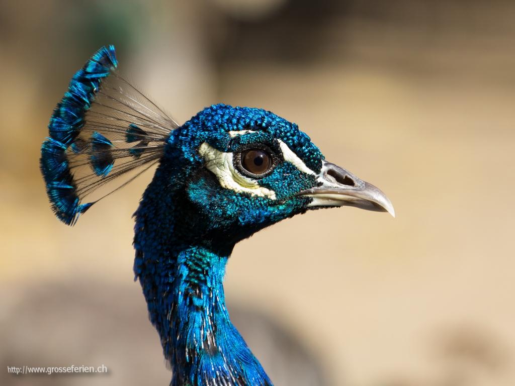 Portugal, Evora, Bird