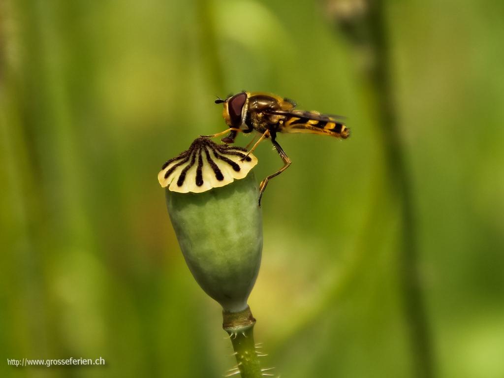Serbia, Studenica, Insect
