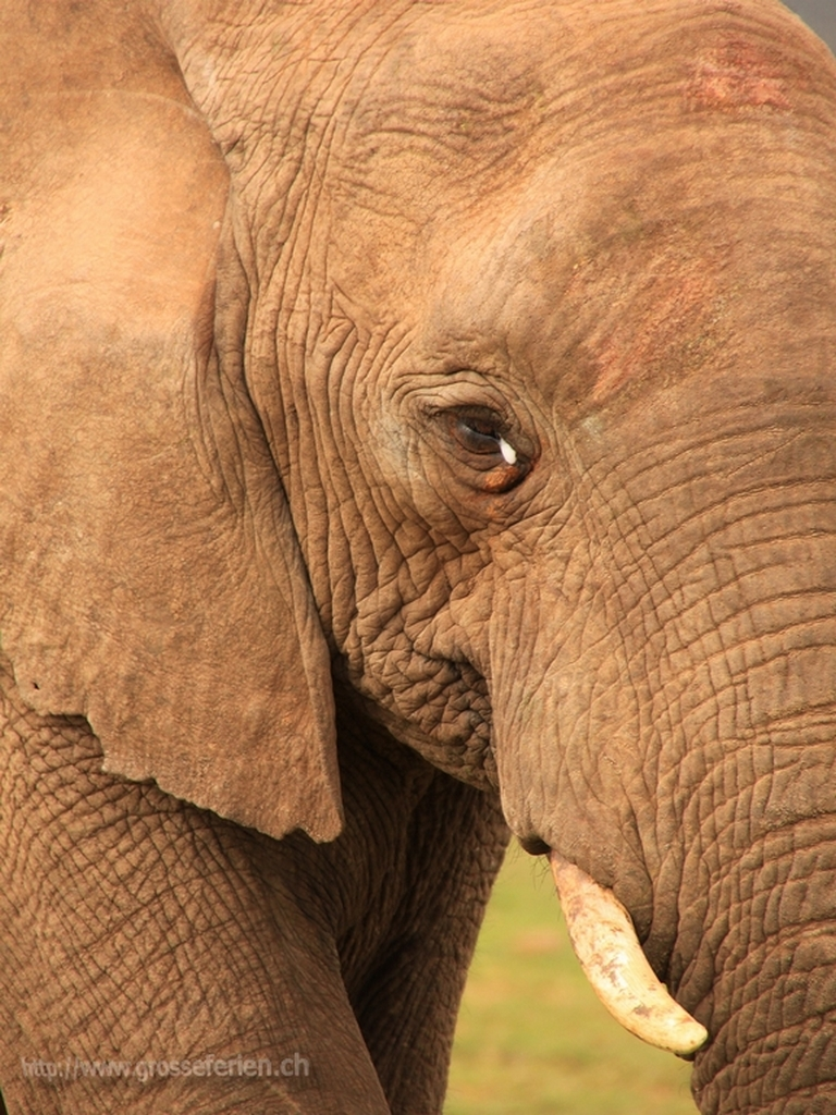 South Africa, Addo Elephant National Park, Elephant