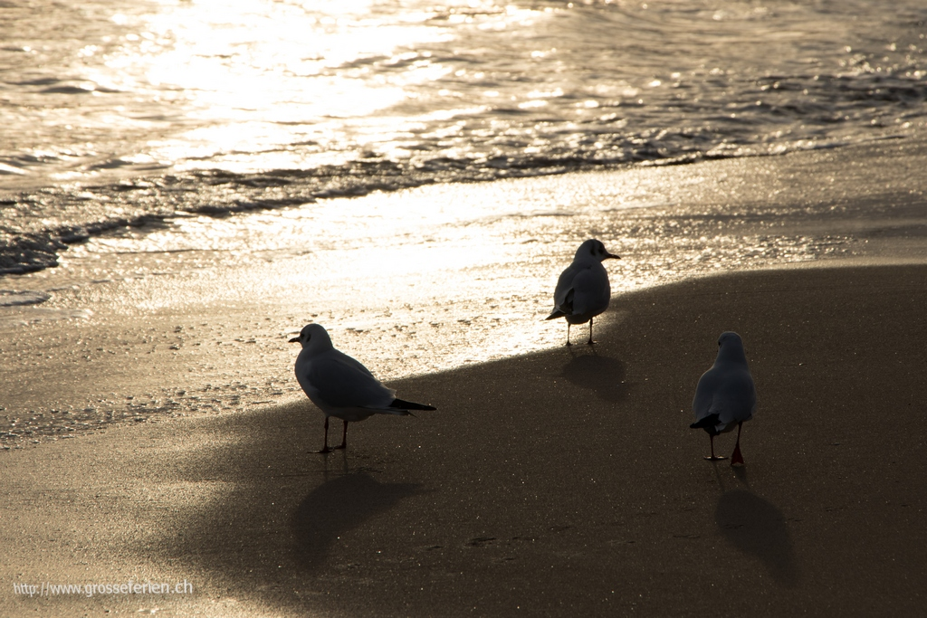 Spain, Sitges, Seagull