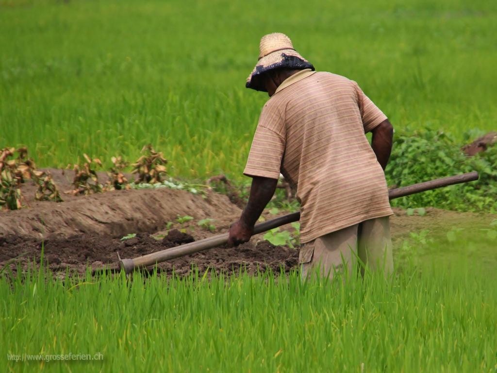 Sri Lanka, Hikkaduwa, Farmer
