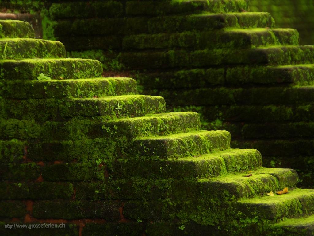 Sri Lanka, Polonnaruwa, Stair