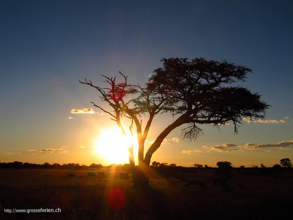 Zimbabwe, Hwange National Park, Landscape
